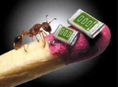 microchips-fósforo-hormiga