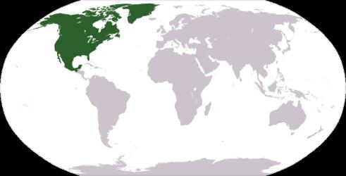 North America 4