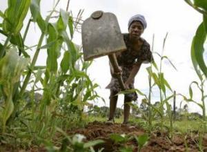 agricultura_zimbabue