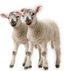 animales_clonados