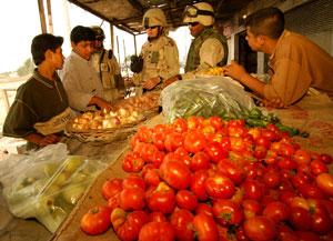 new-iraq-tomato