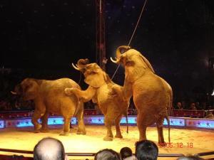 elefantes-1