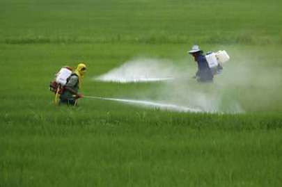 pesticidagricola