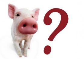 gripe-porcina-portada