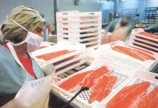salmon chileno