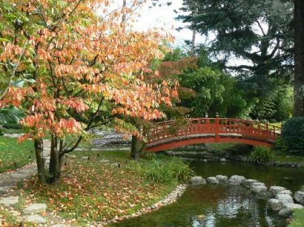 http://elproyectomatriz.files.wordpress.com/2011/03/jardin-japones.jpg?w=444&h=332